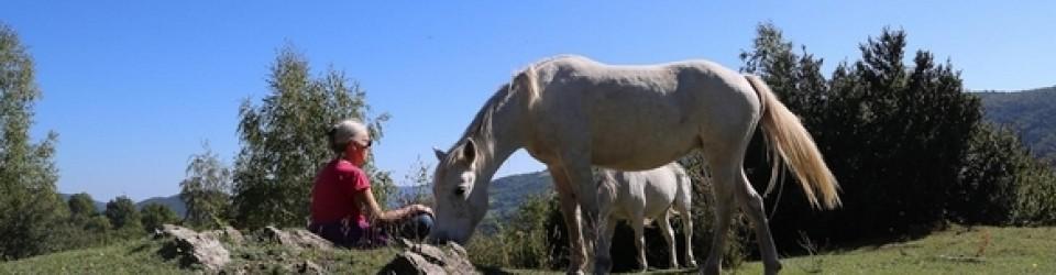 Nath cheval Mir rec