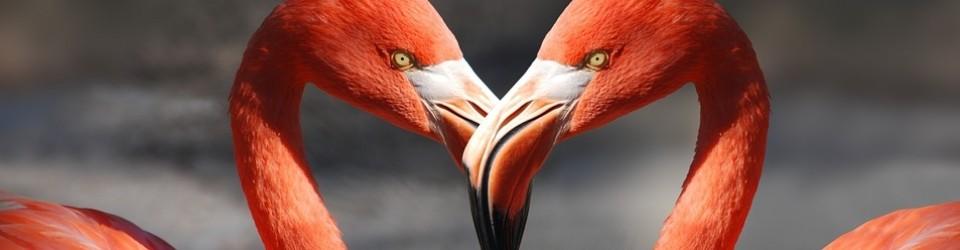 flamingo rec